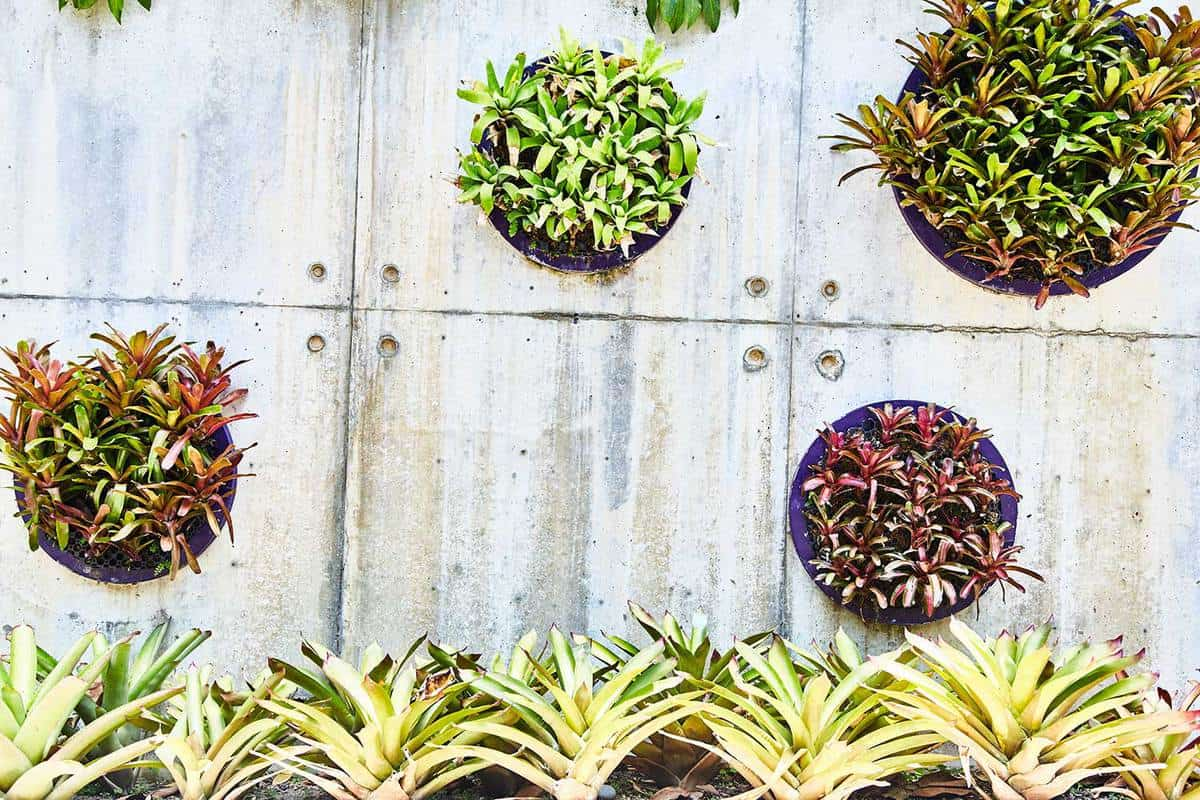 Decorative plants on the wall in the park