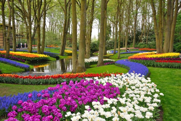30+ Stunning Tulip Planting Ideas