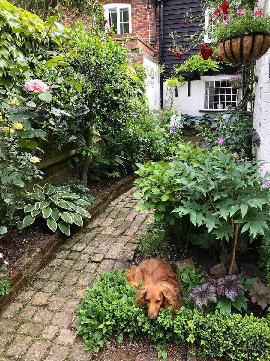 Dog in an english cottage garden