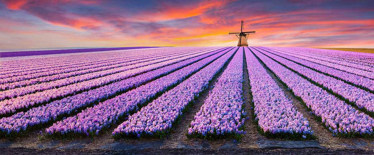 Dramatic spring scene on the flowers farm
