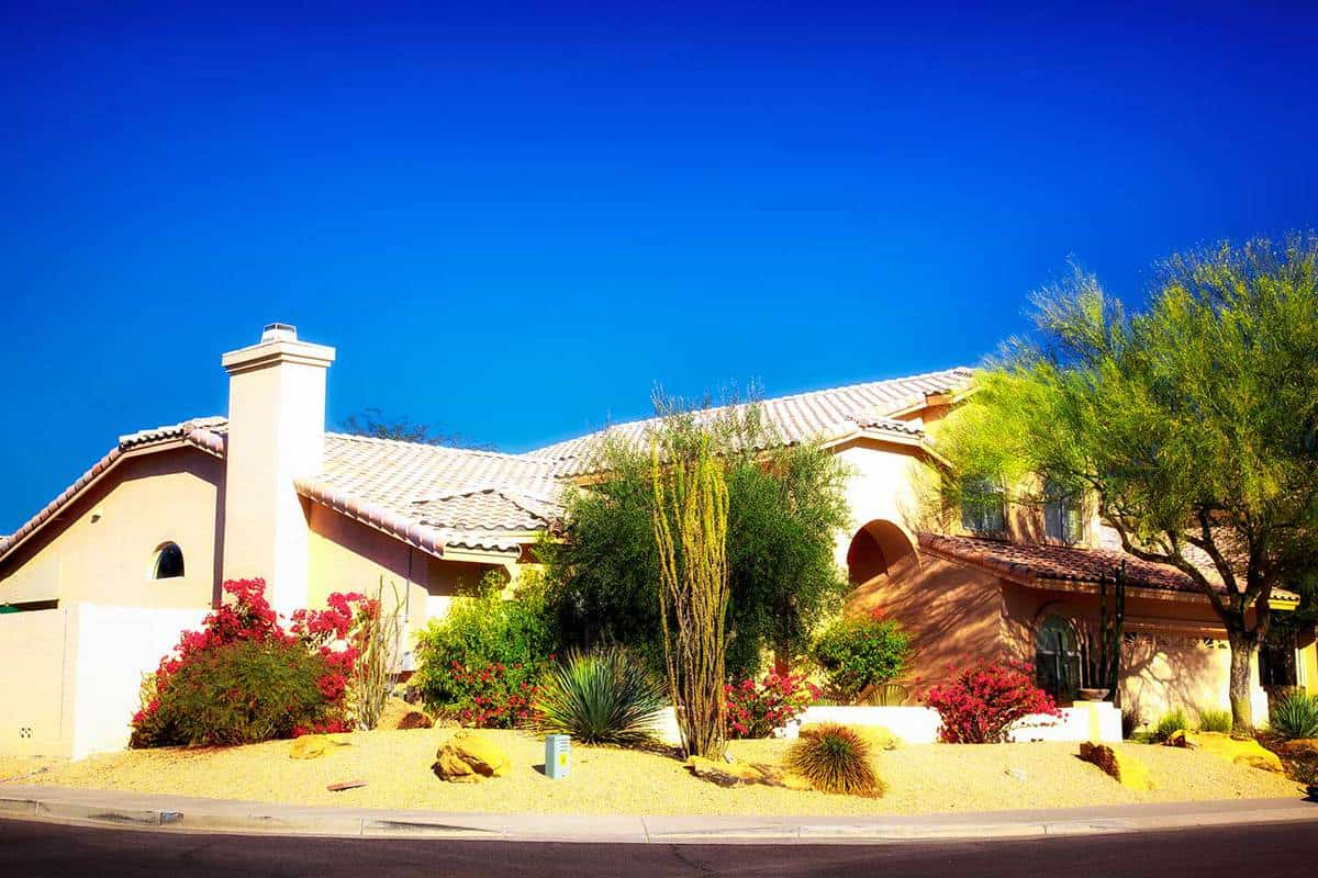 Dreamy beautiful style desert landscaped