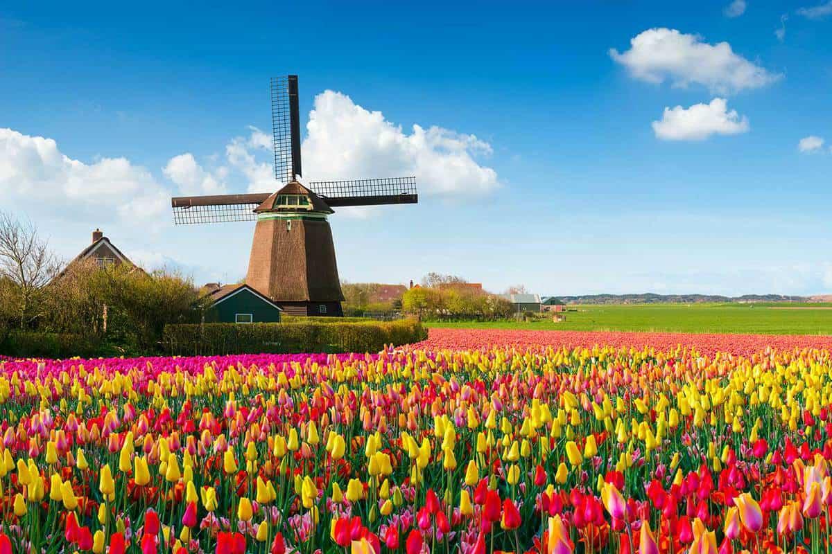 Dutch spring scene