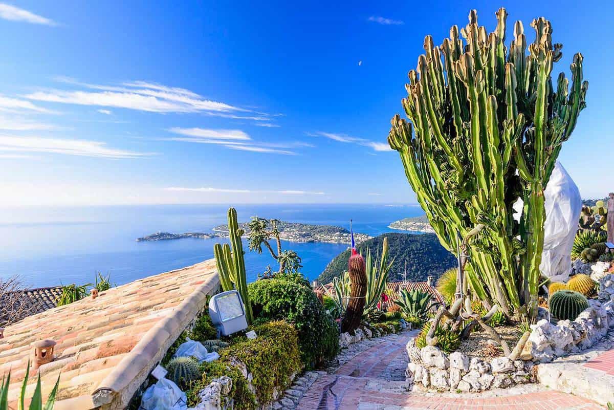 Exotic cactus garden in a village