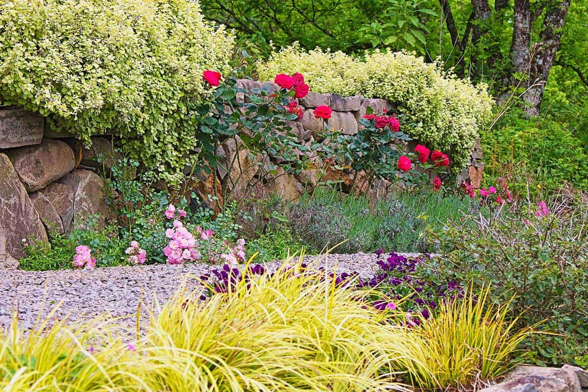 Garden path and colorful flowers