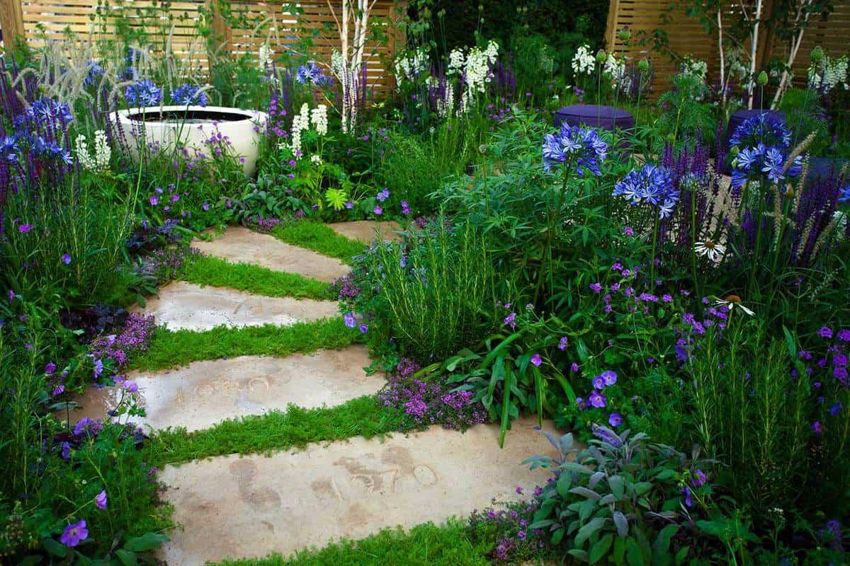 Garden path full of purple plants