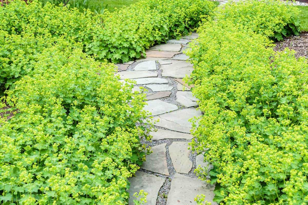 Garden path made of stone