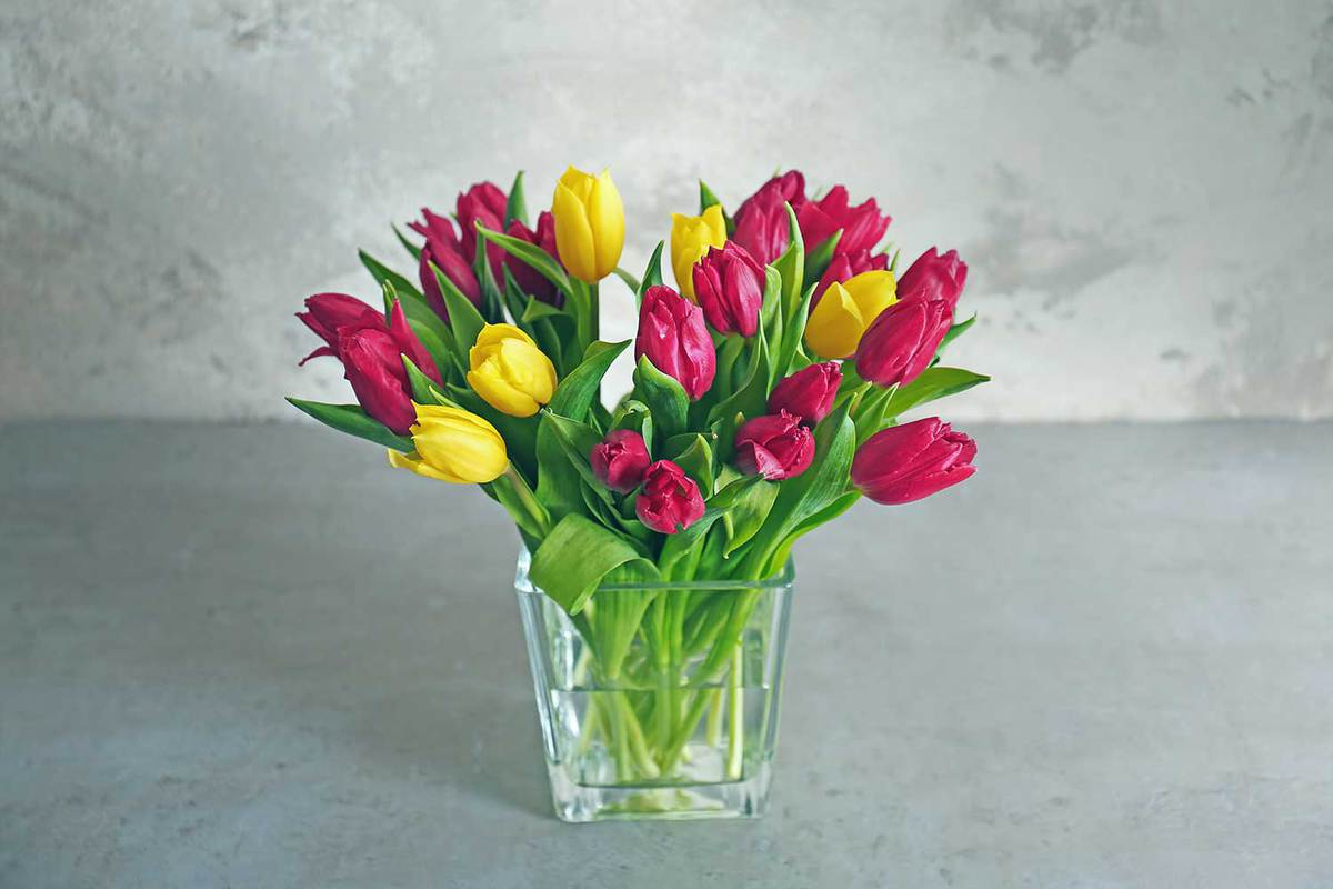 Glass-vase-with-bouquet-of-beautiful-tulips