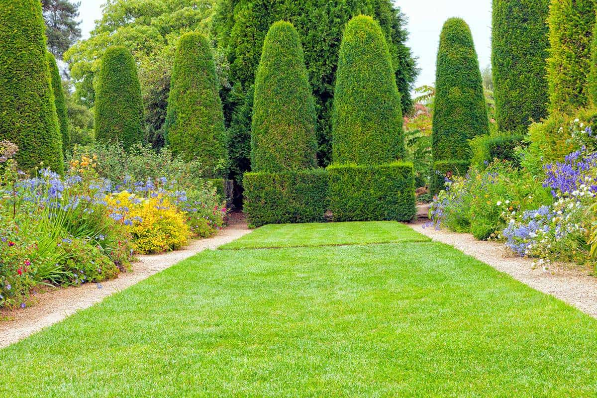 Green lawn towards cone trimmed topiary trees