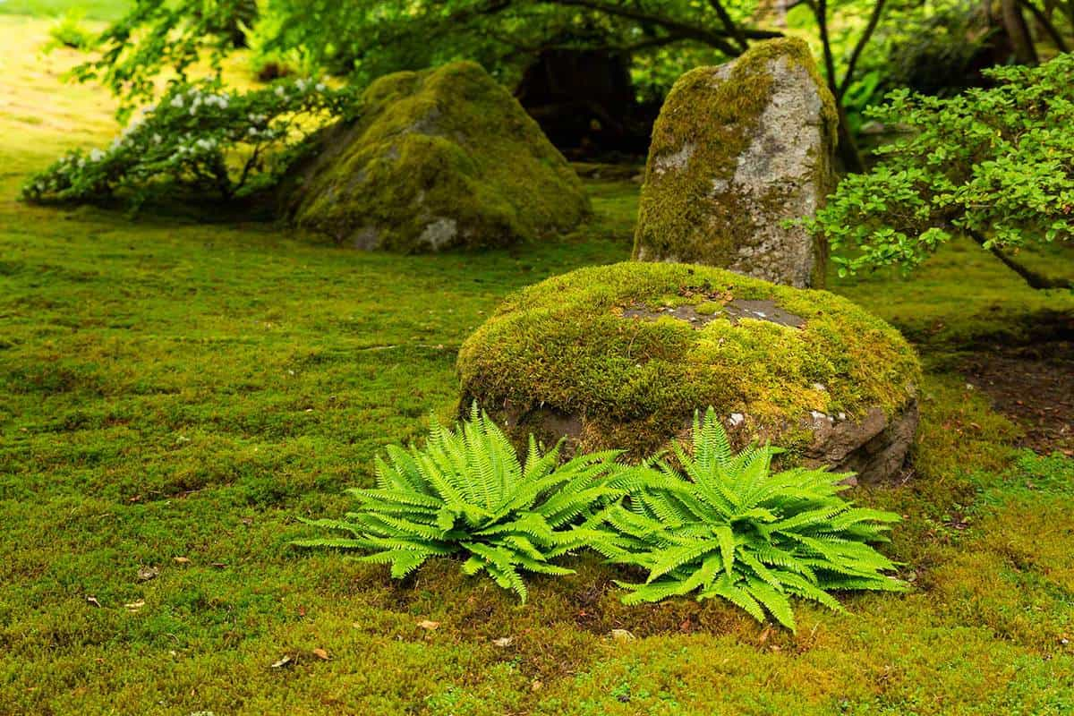 Japanese garden with moss covered rocks