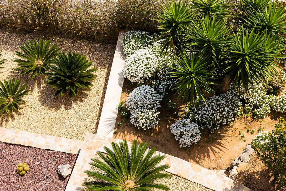 68 Cactus Landscaping Ideas That Will Inspire You Garden Tabs