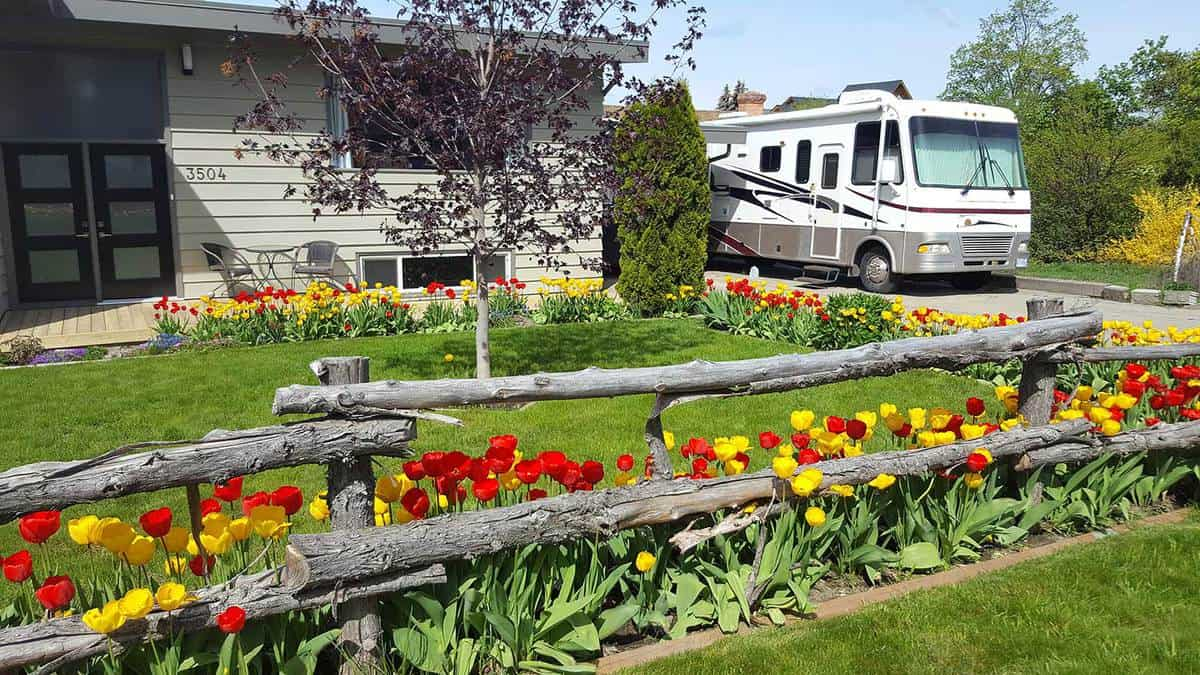 Large motorhome park near a garden of yellow spring tulips