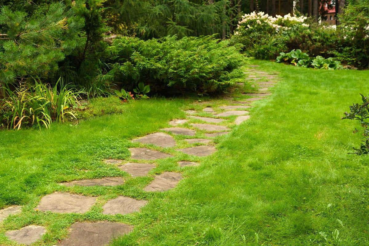 Lawn among decorative bushes with a path made of stone slabs