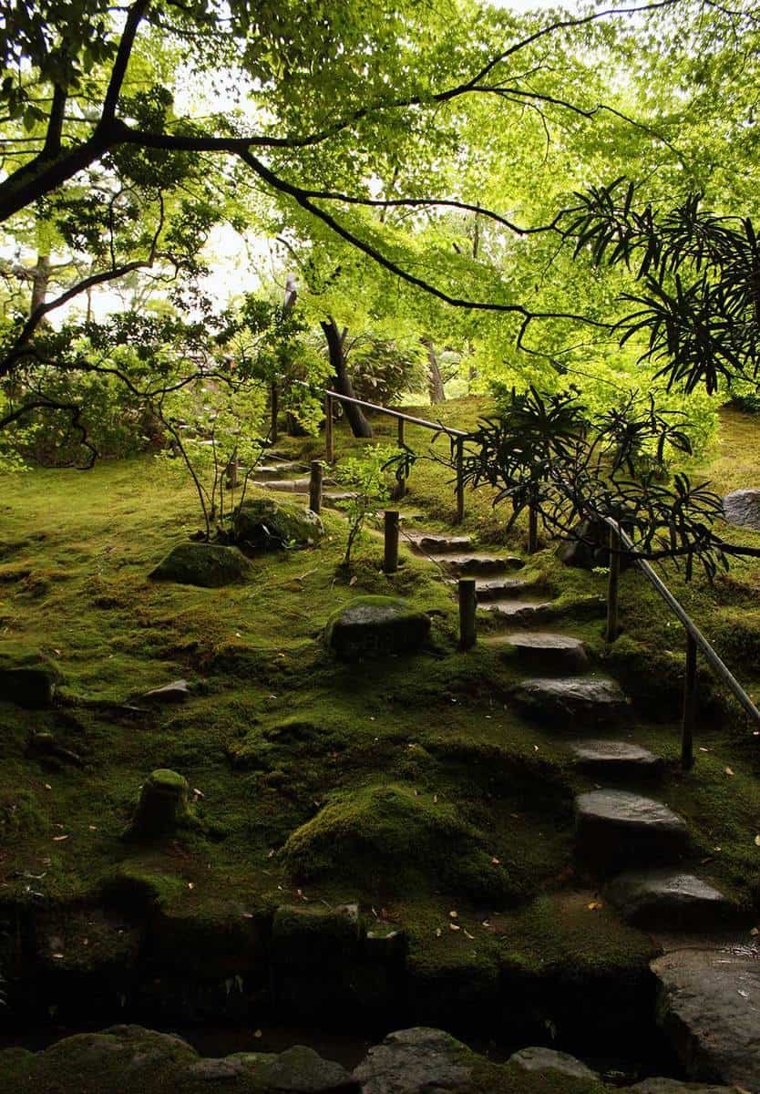 Lush and beautiful japanese garden
