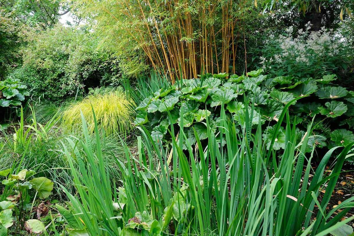 Lush foliage in an english garden