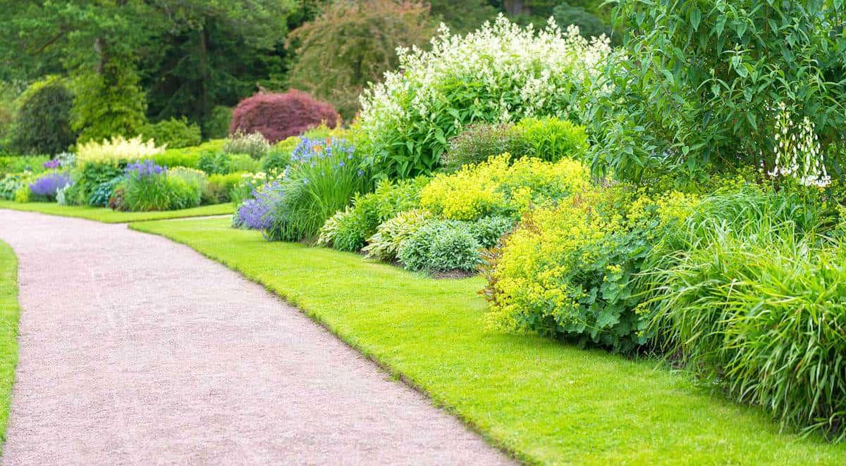 Multicolored garden