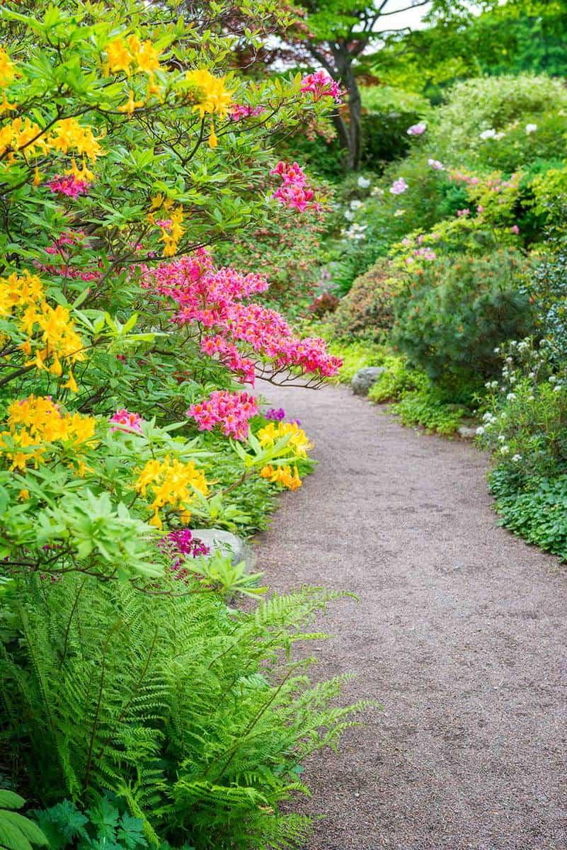 Multicolored ornamental garden