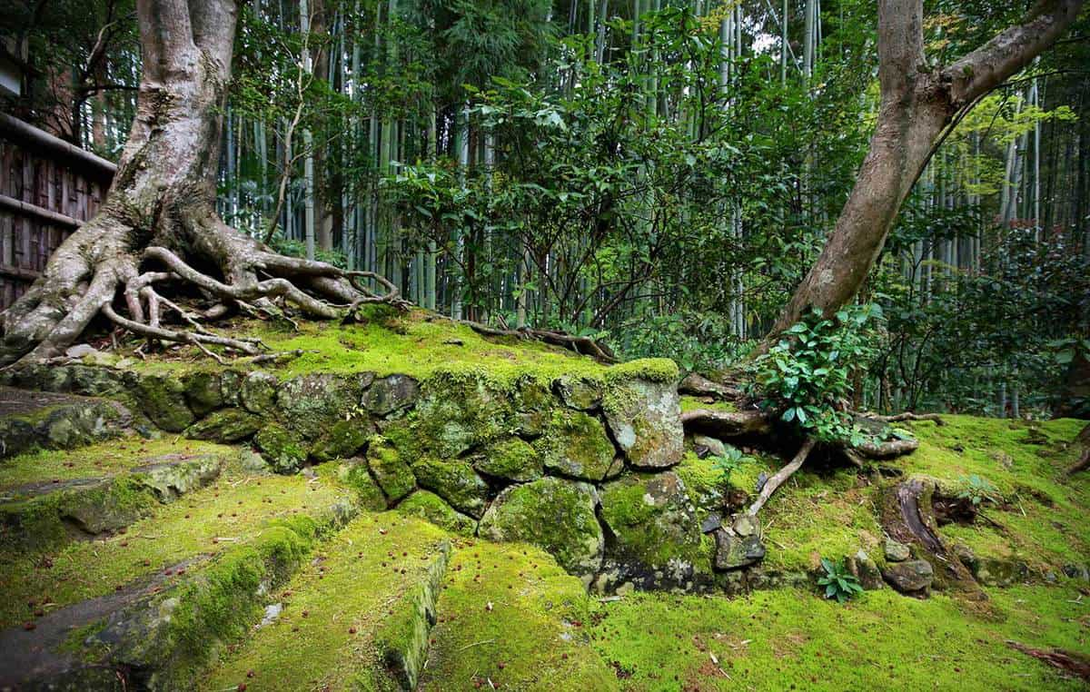 Old mossy japanese garden