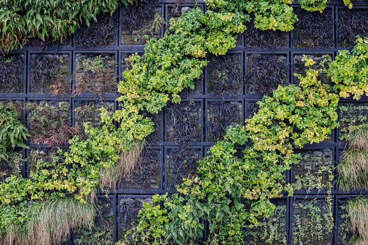 Outside vertical wall garden in winter