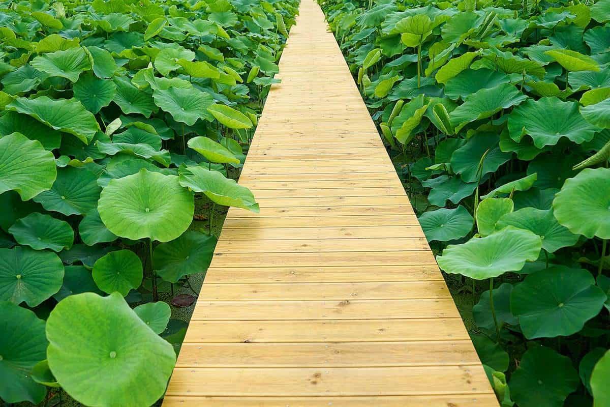 Pathway full of plants