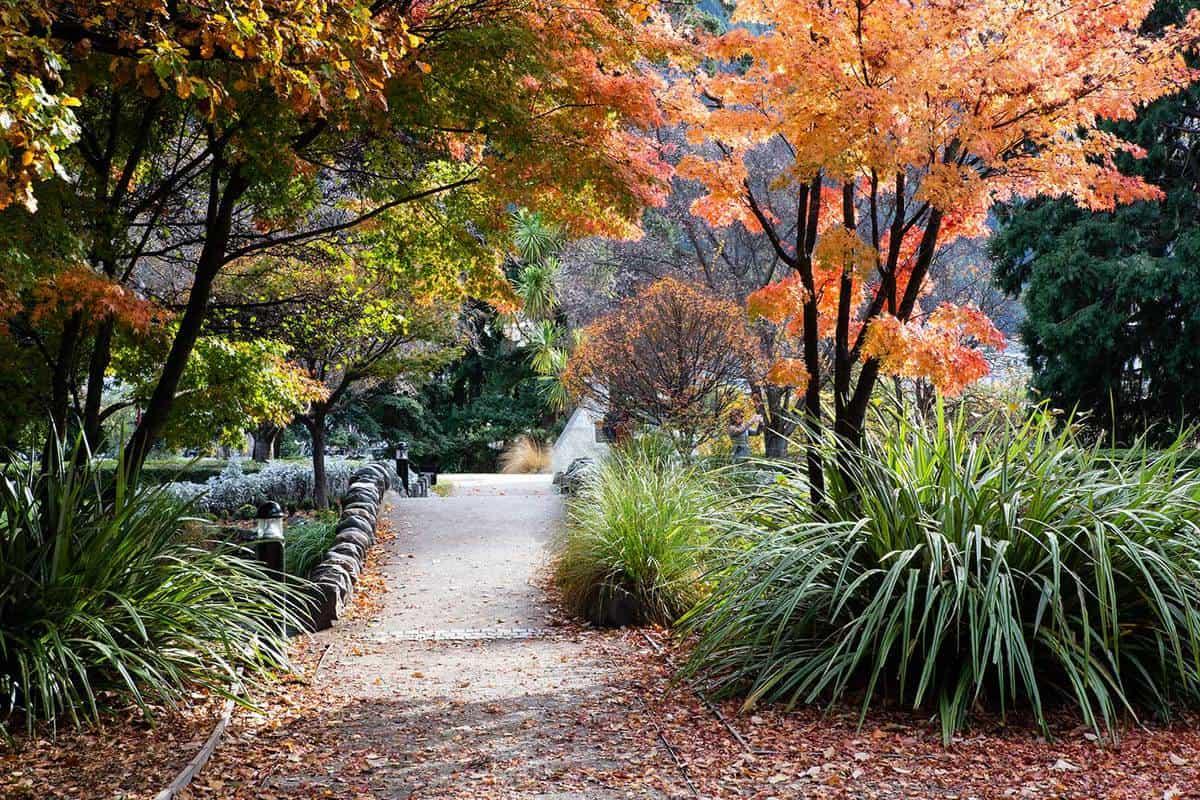Pathway in fall season