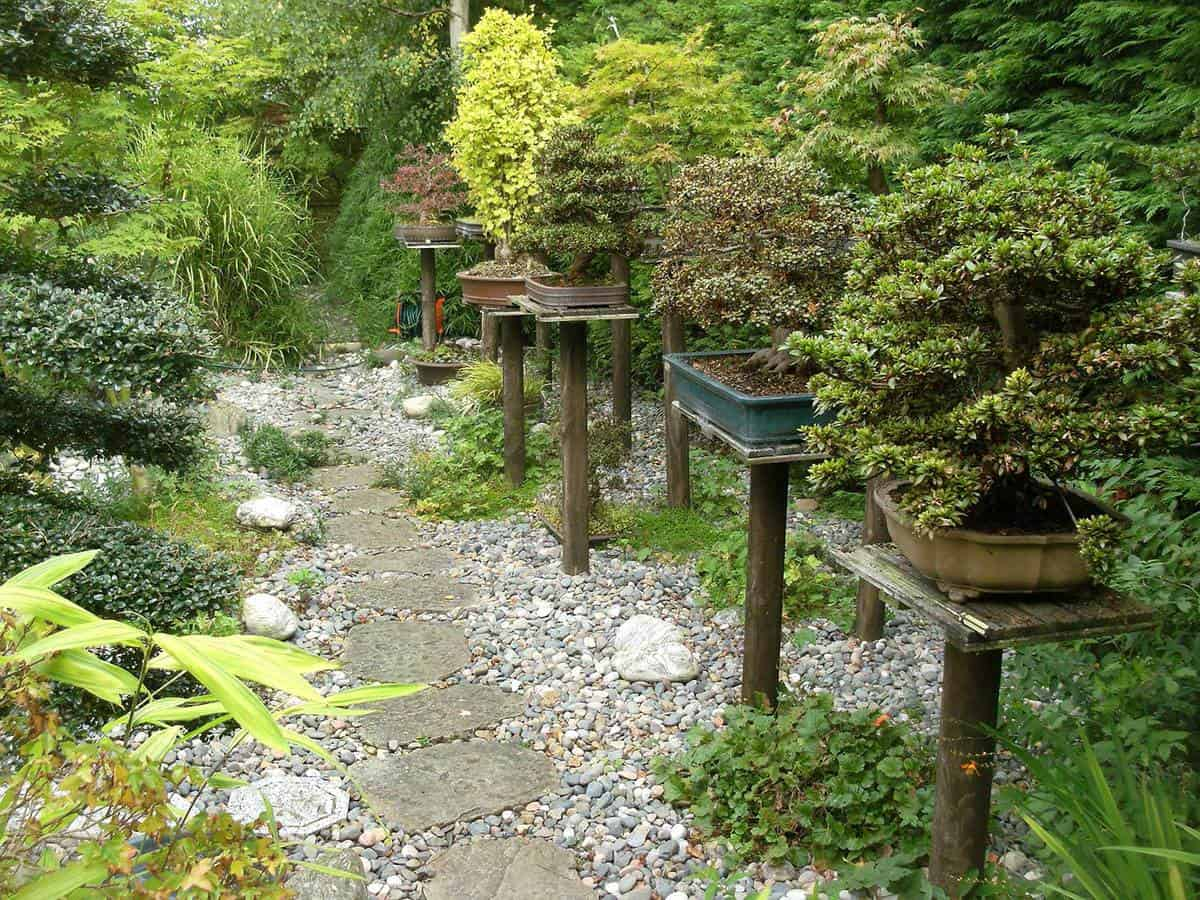 Pathway to a japanese garden with bonsai plants