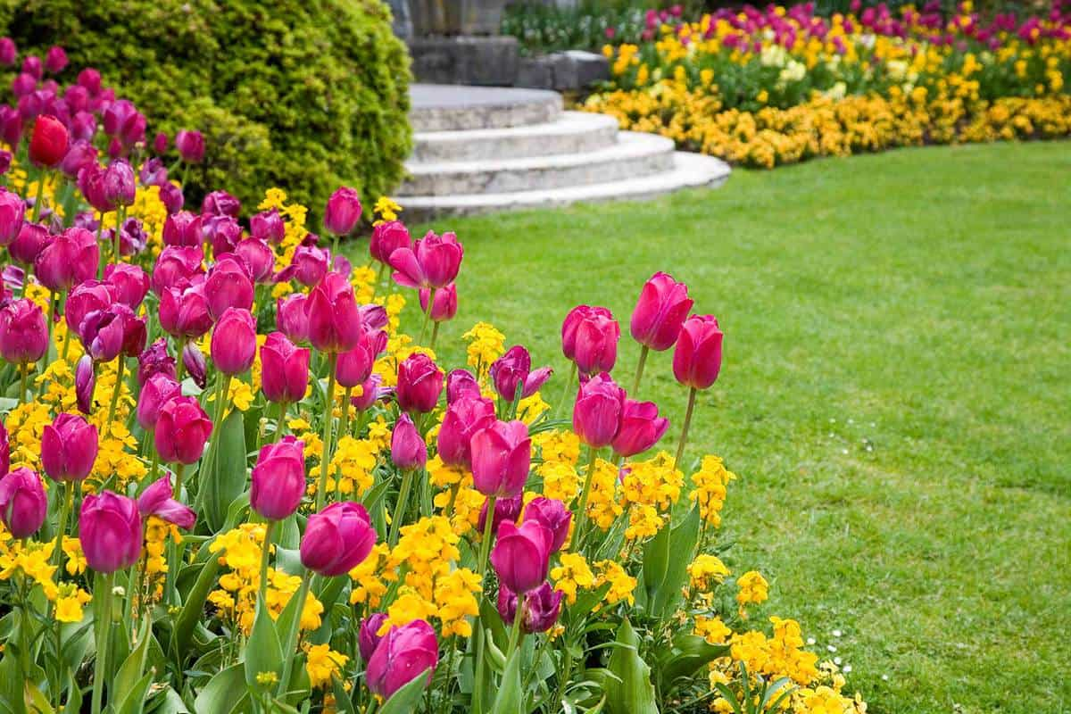 Pink and yellow flowers around a garden lawn