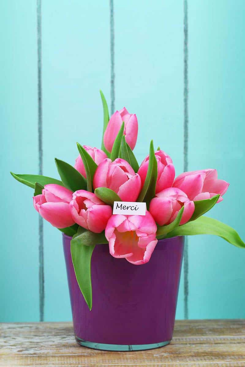 Pink-tulips-in-flower-pot