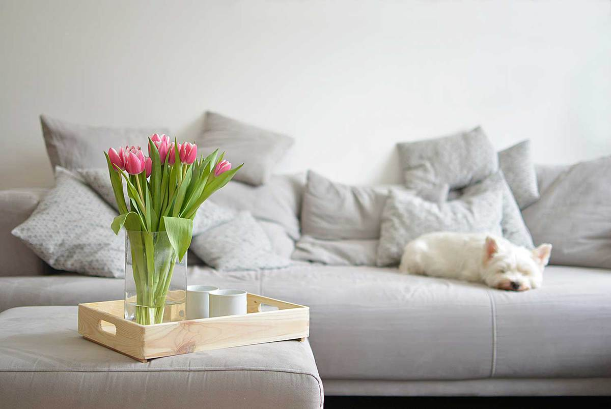 Pink-tulips-in-glass-vase-with-sofa-on-the-living-room