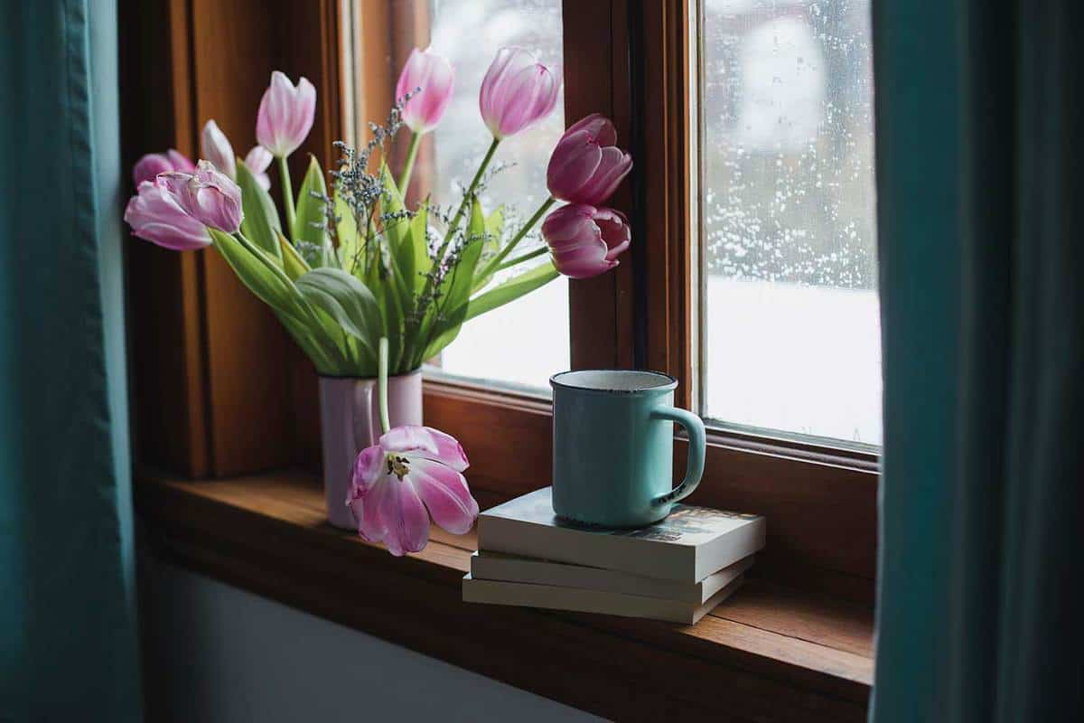 Pink-tulips-on-a-window-sill