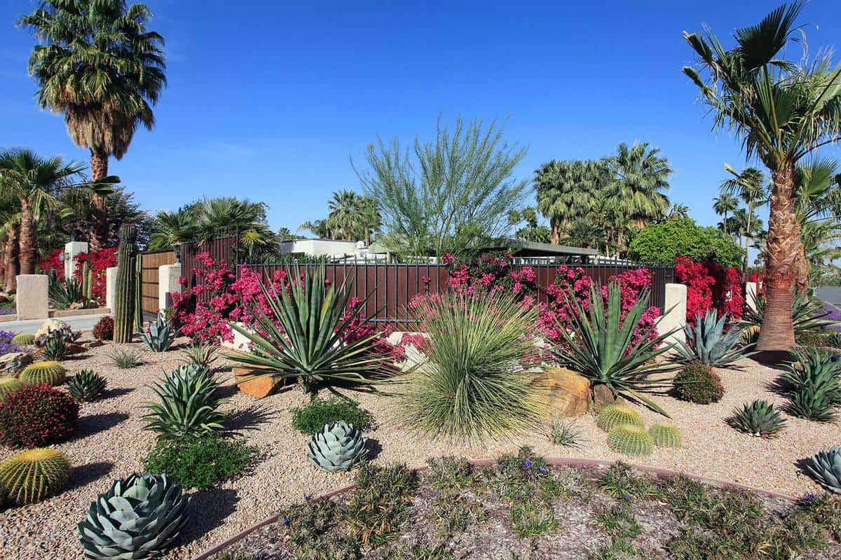 Spectacular water conservation gardening with cactus and succulents