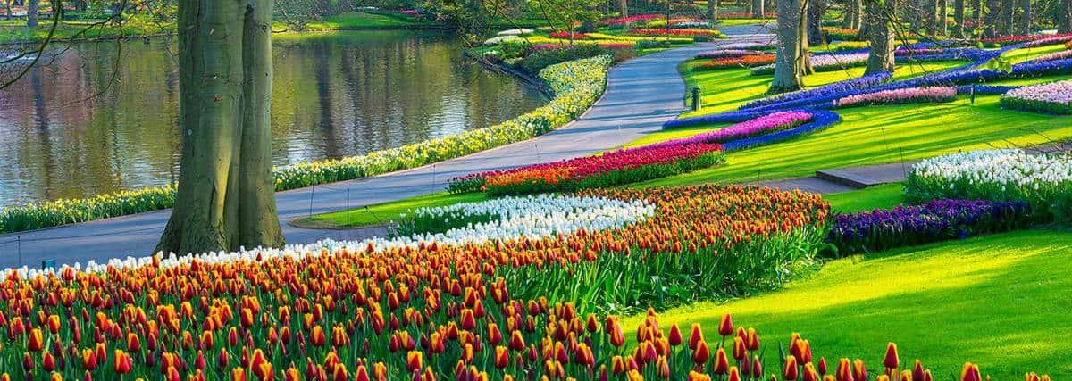 Spring flower tulip in a park
