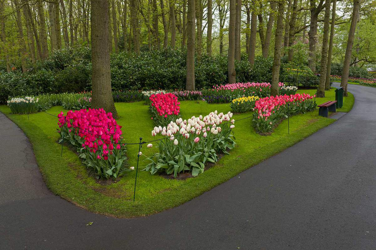 Spring flowers in the park