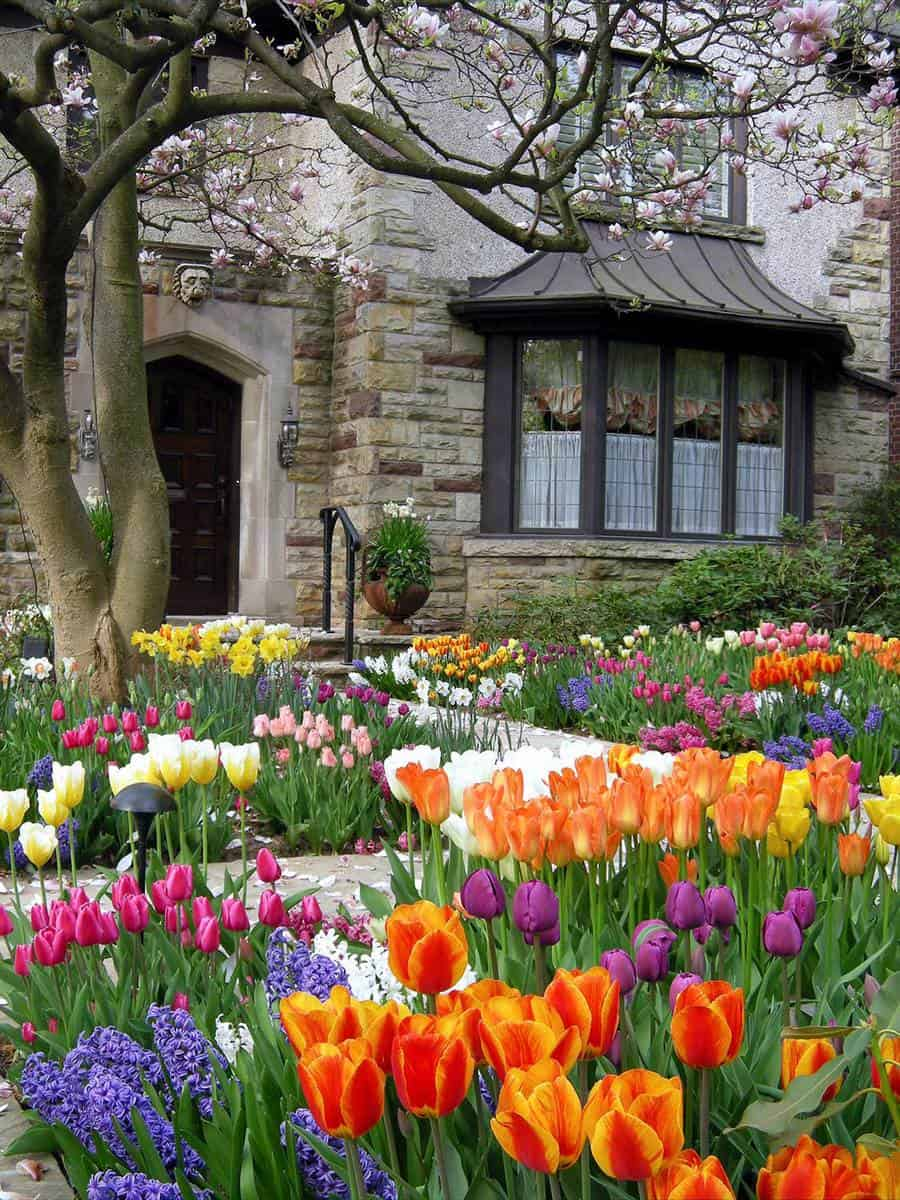 Spring garden, tulips and hyacinths