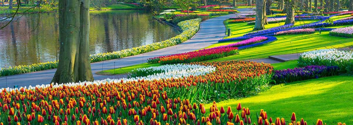 Spring tulips in a park