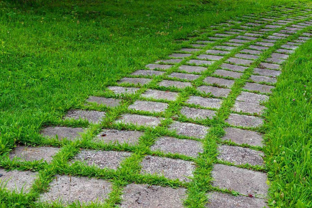 Square concrete pavement walkway overgrown with grass