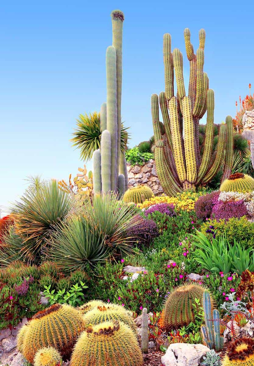 Staging of cactus in rock garden on blue sky background