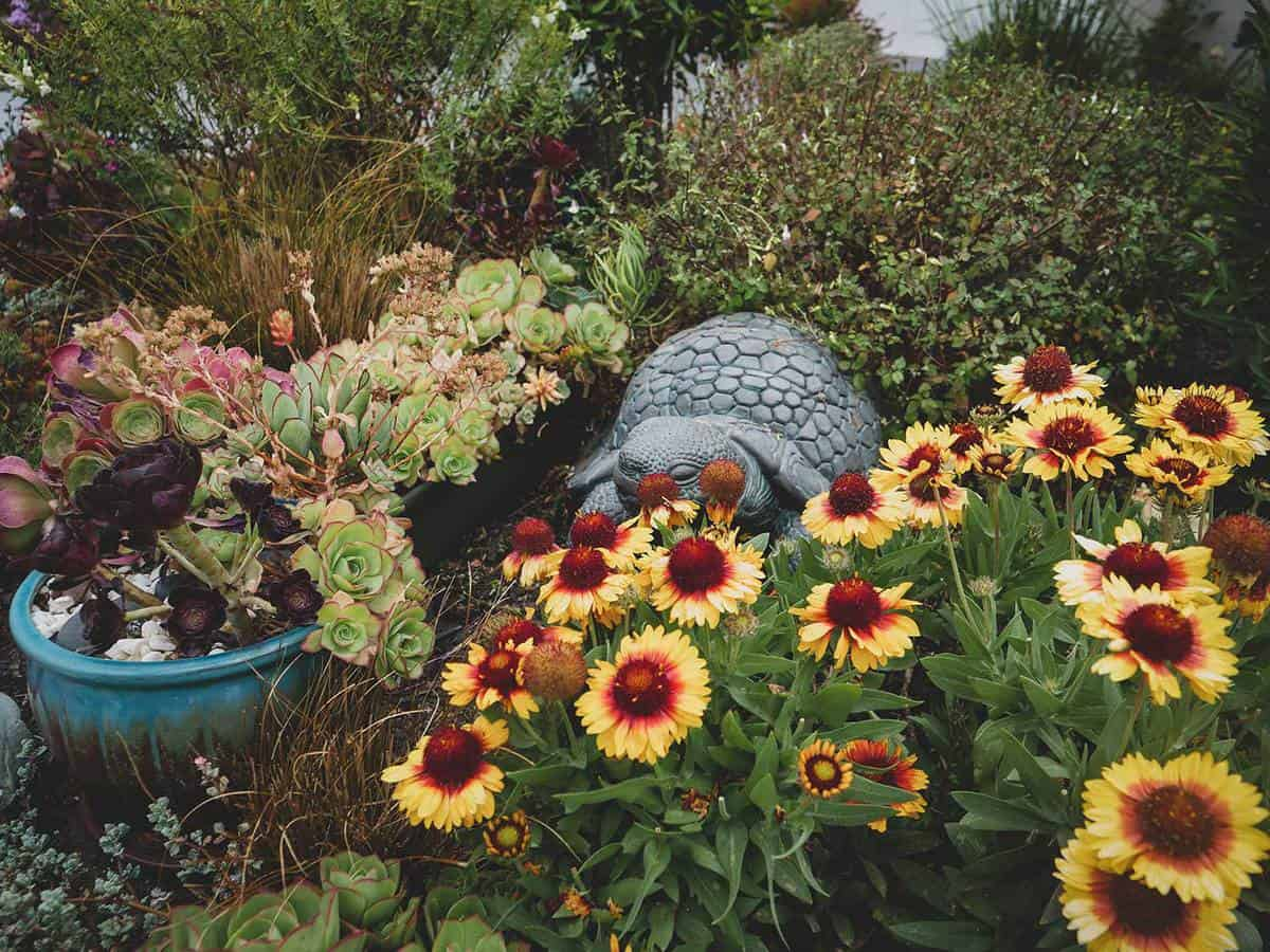 Succulent and flower garden with turtle rock