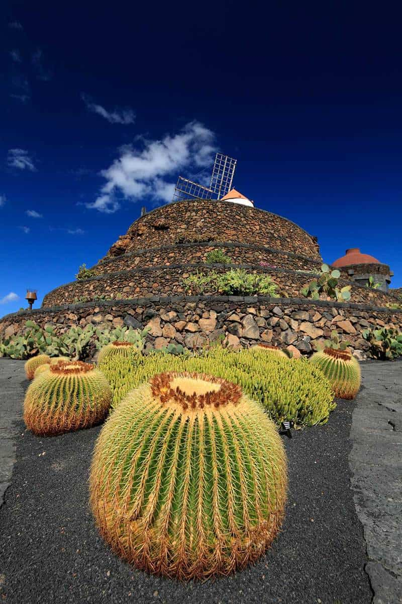 Succulent plant and a windmill