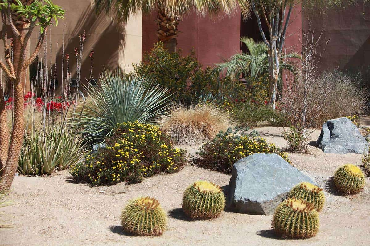 Succulent plants and cacti