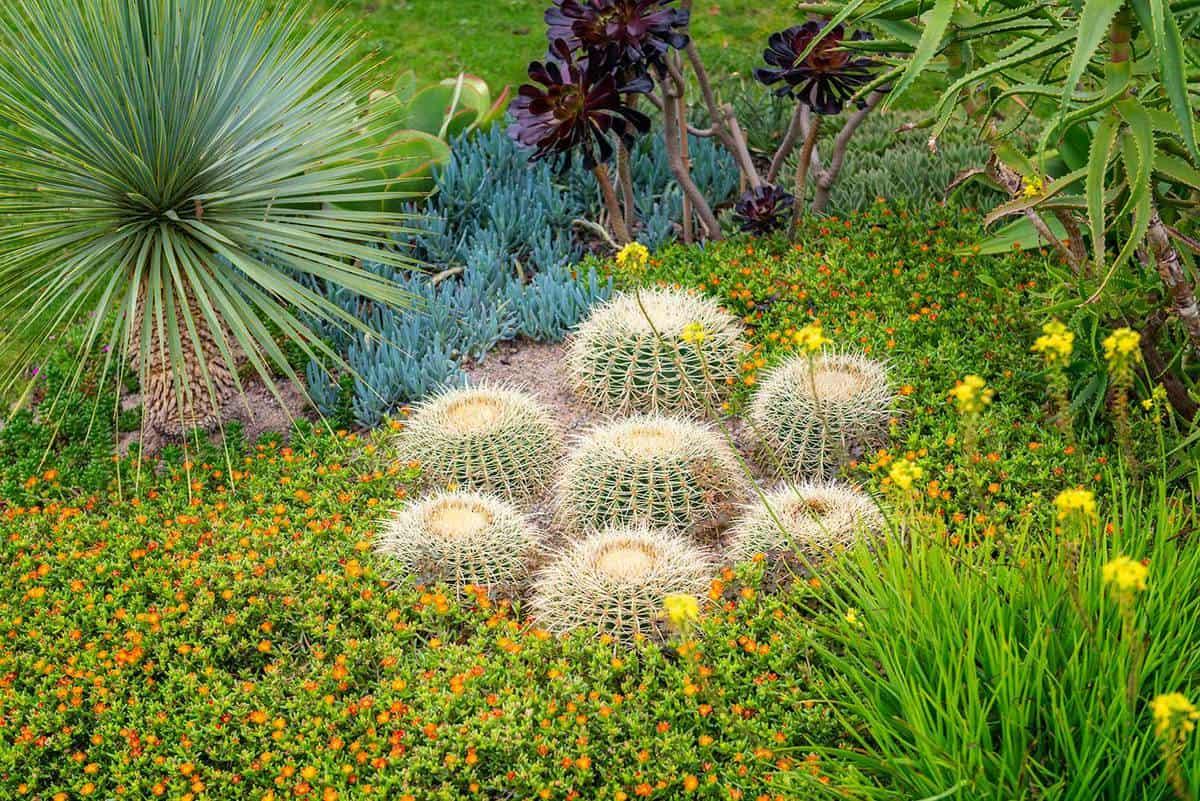 Succulents outdoor garden