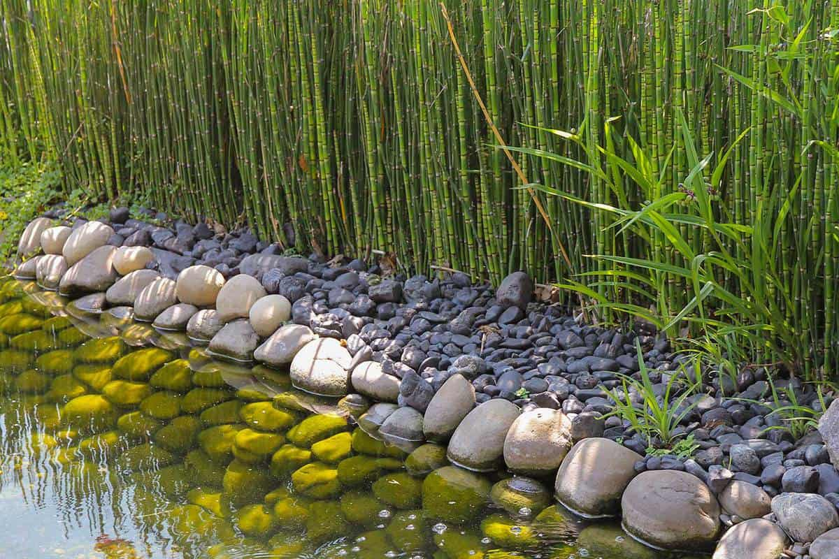 The green bamboo grows by the lake