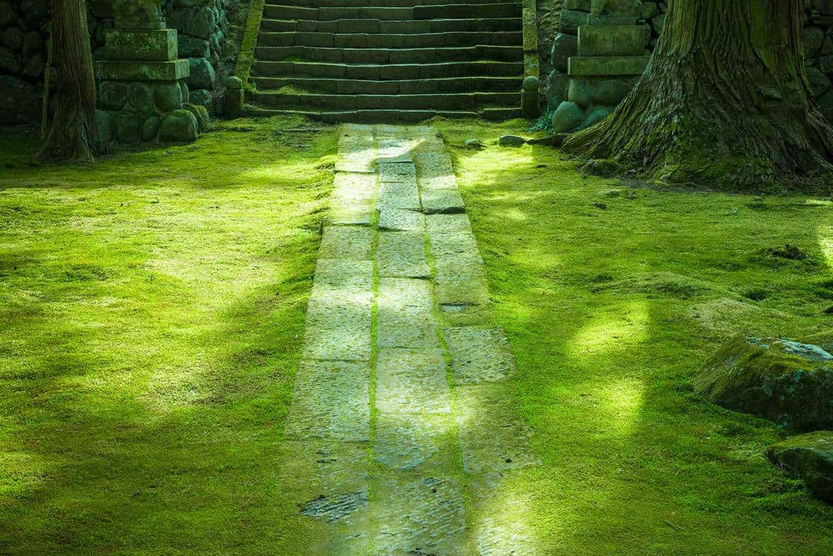 The way of a stone of moss