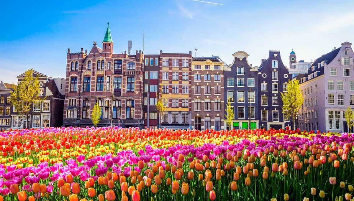 Traditional old buildings and tulips