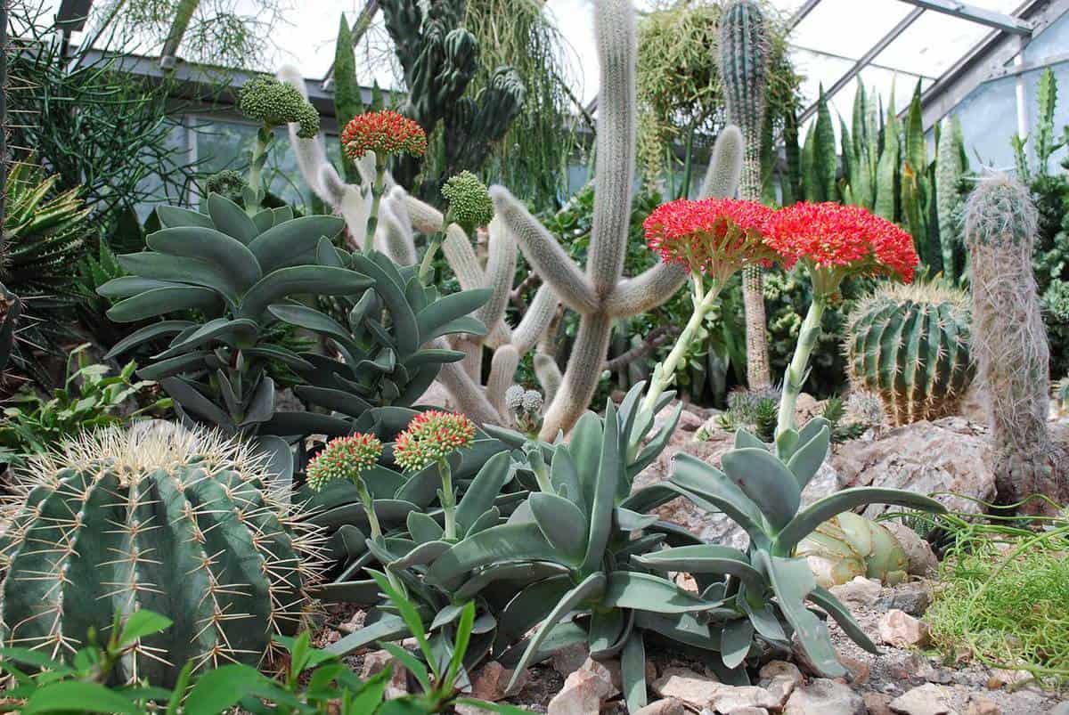 Tropical cactus garden