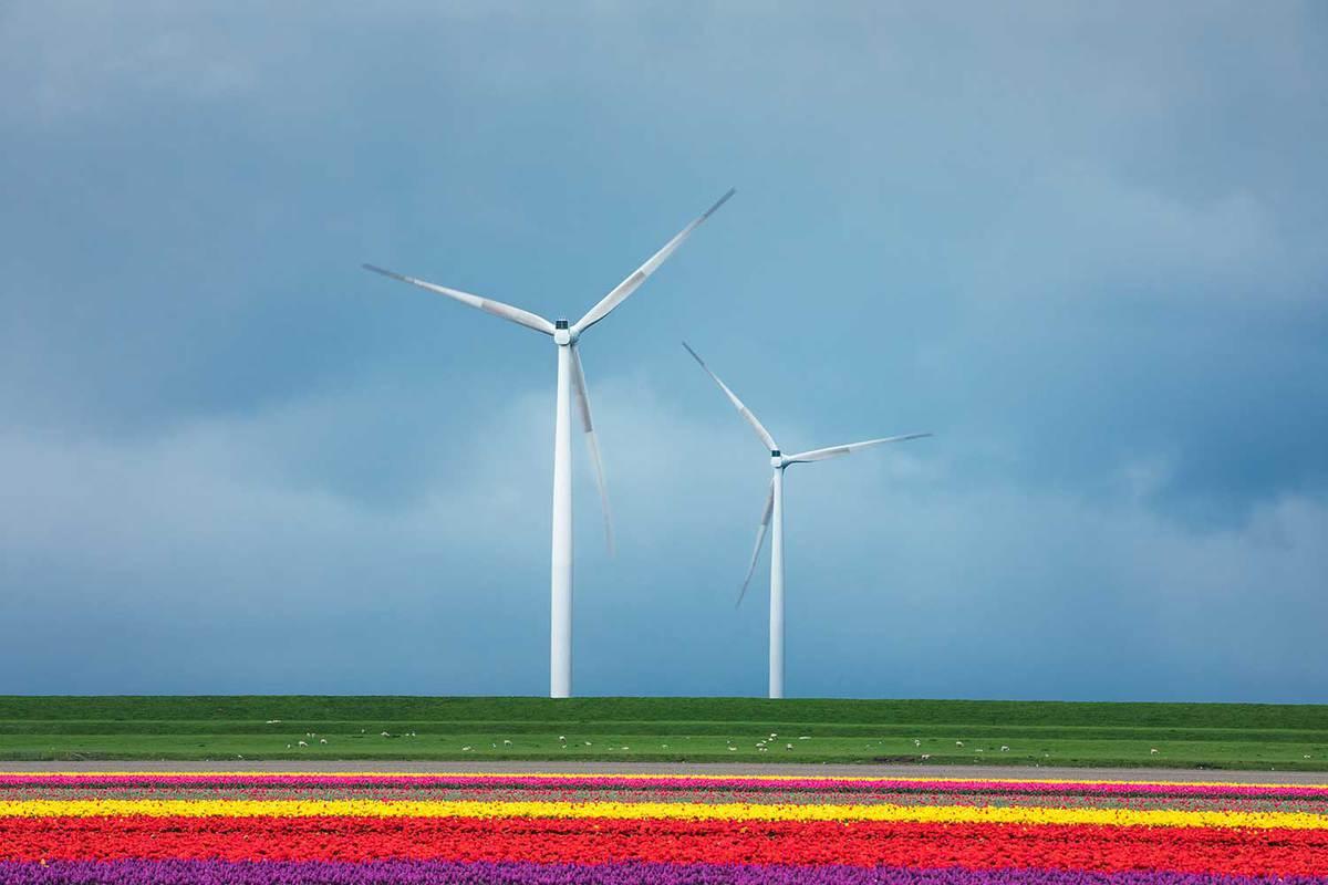 Tulip fields with modern windmill