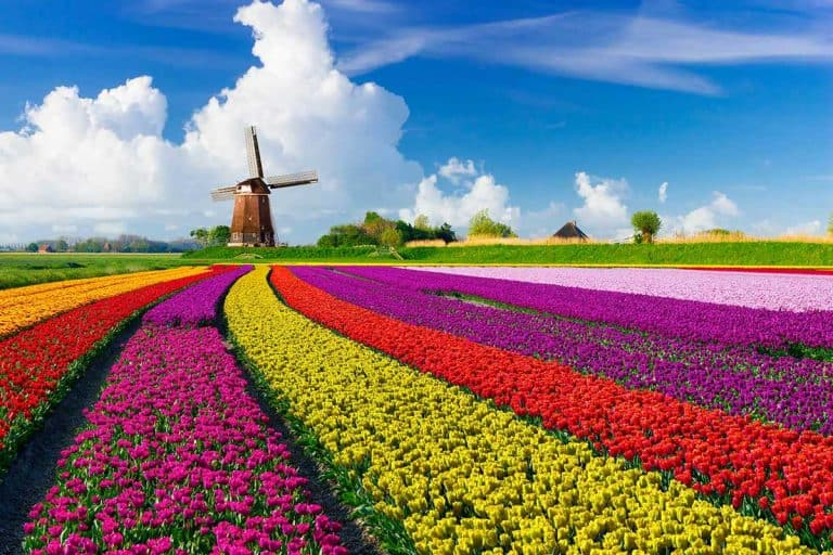 48 Stunning Tulip Fields Photos That Will Inspire You