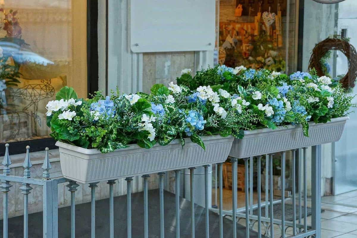 Two white flowerpots with decorative green vegetation and flowers on the fence rods at the glass window in the street