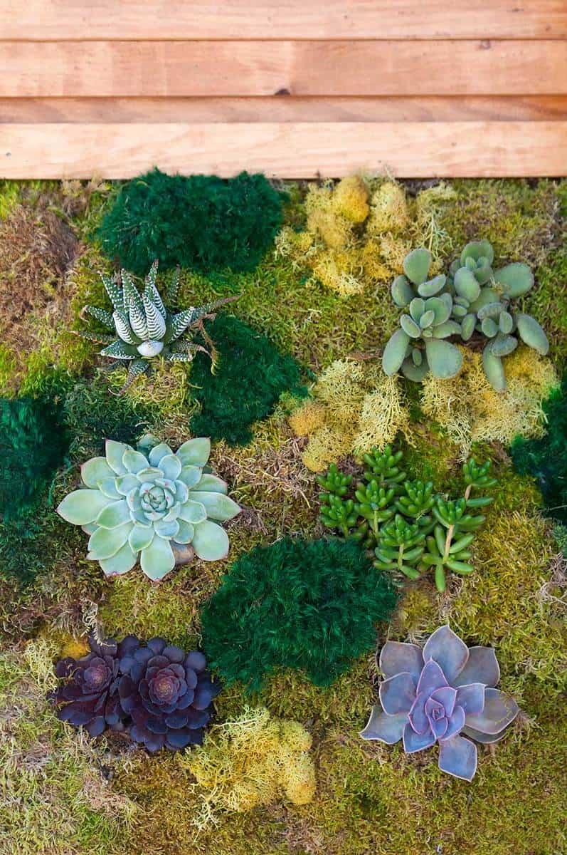 Vertical garden of succulents and moss