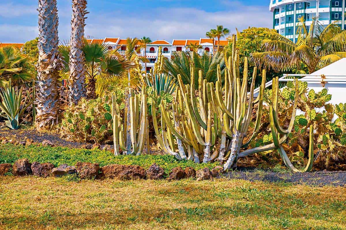 View of different types of cacti on the coast