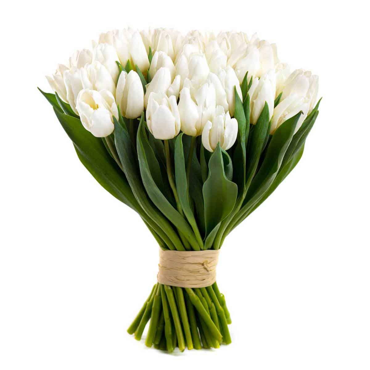 White-tulip-bouquet